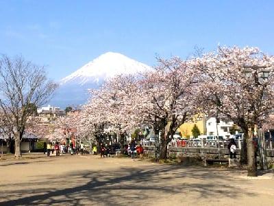 ■富士山と桜の画像