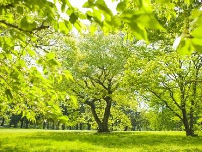 木や植物の画像