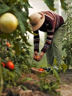 野外園芸や外で作業をする人の画像